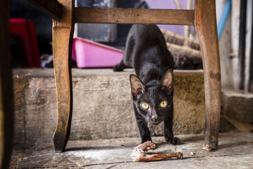 «Коты и собаки расскажут о Камбодже больше, чем достопримечательности» «Коты и собаки расскажут о Камбодже больше, чем достопримечательности» Travel in Cambodia to take pictures about cats and dogs 5b06d058a2e88  880