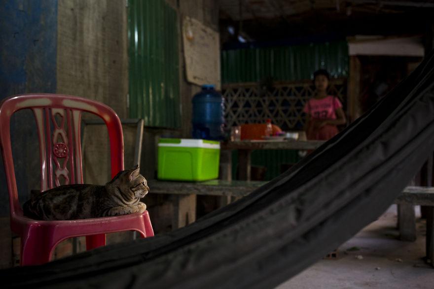 «Коты и собаки расскажут о Камбодже больше, чем достопримечательности» «Коты и собаки расскажут о Камбодже больше, чем достопримечательности» Travel in Cambodia to take pictures about cats and dogs 5b06d05d606d4  880