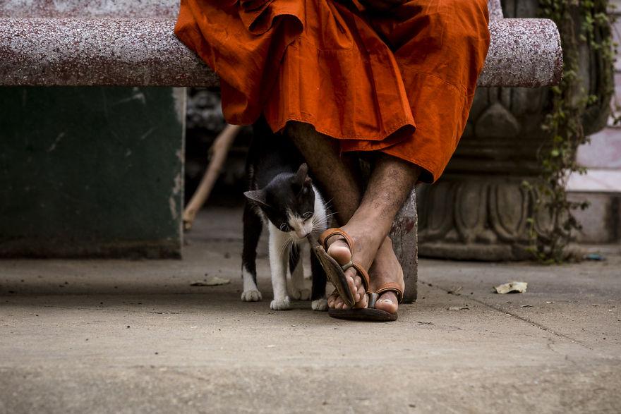 В ожидании Будды: коты и собаки монастырей Камбоджи (фото)