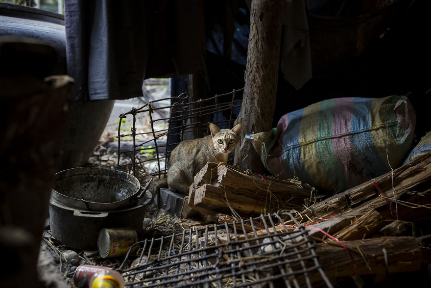 «Коты и собаки расскажут о Камбодже больше, чем достопримечательности» «Коты и собаки расскажут о Камбодже больше, чем достопримечательности» Travel in Cambodia to take pictures about cats and dogs 5b06d06235638  880