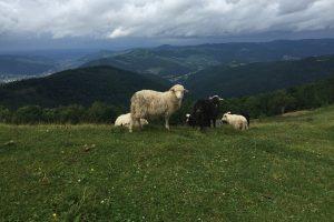 Восхождение на Лысину-Космацкую: поход выходного дня в Карпаты