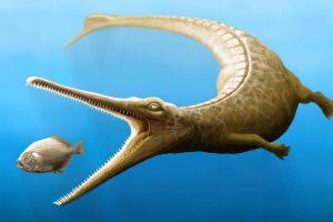 Доисторические крокодилы имели дельфиний хвост