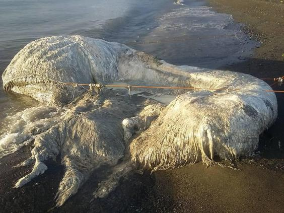 На Филиппинах море вынесло на берег длинноволосое чудовище