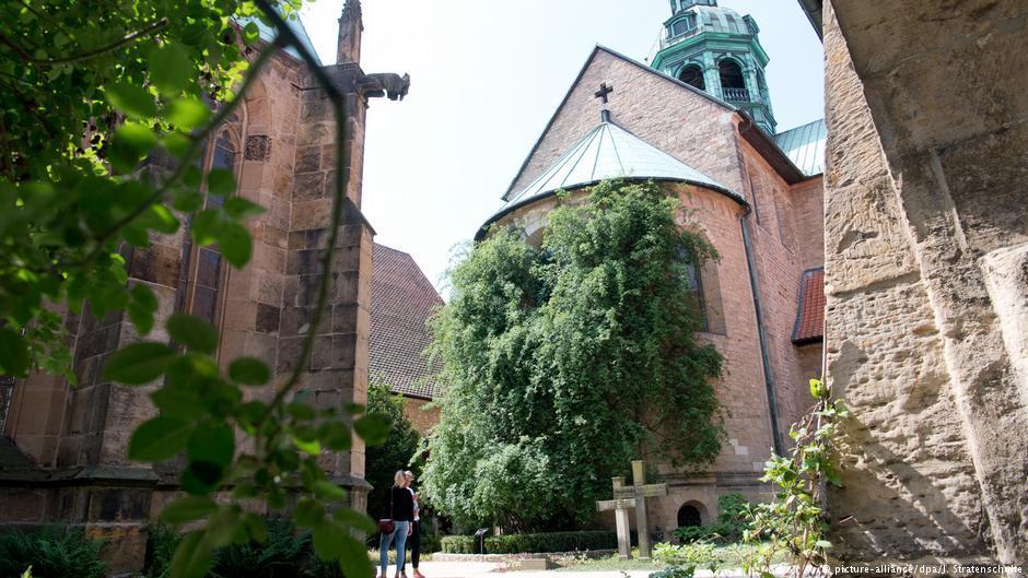 В Германском соборе расцвела 1000-летняя роза