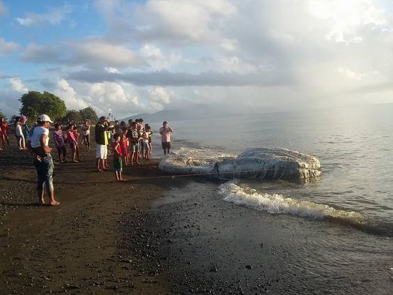 На Филиппинах море вынесло на берег длинноволосое чудовище На Филиппинах море вынесло на берег длинноволосое чудовище locals globster