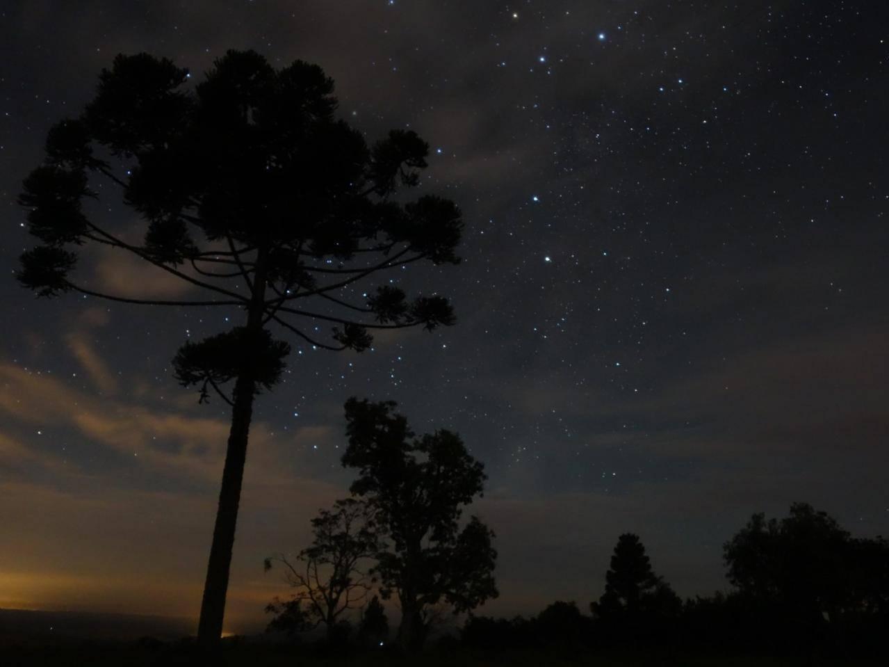 Исчезающие леса Южной Америки были насажены древними племенами