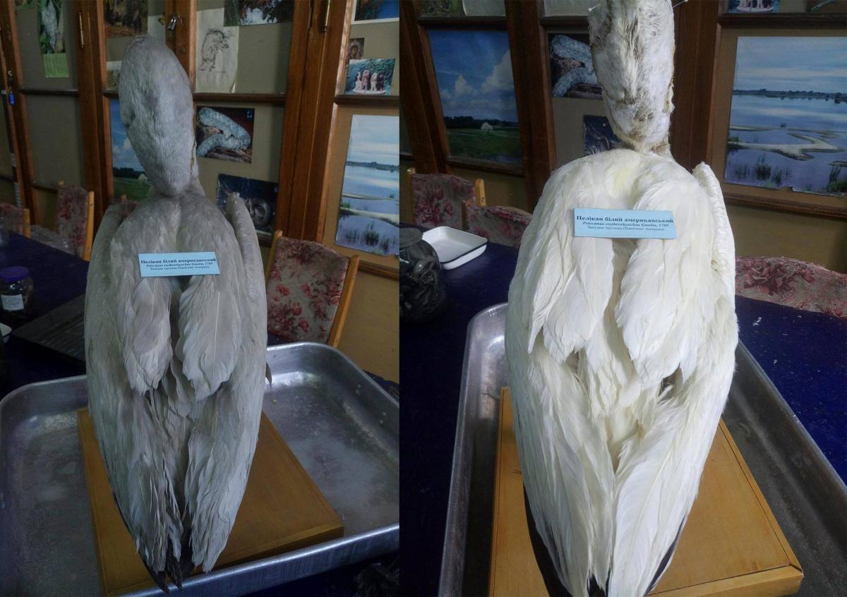 В Киеве в чучеле пеликана нашли тайное послание