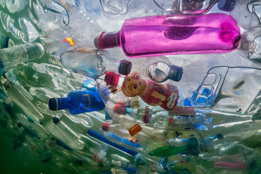 national geographic выпустил номер, посвященный проблеме пластика в океане National Geographic выпустил номер, посвященный проблеме пластика в океане plastic crisis impact on wildlife national geographic june issue cover 6 5afd84cd5d0e2  880