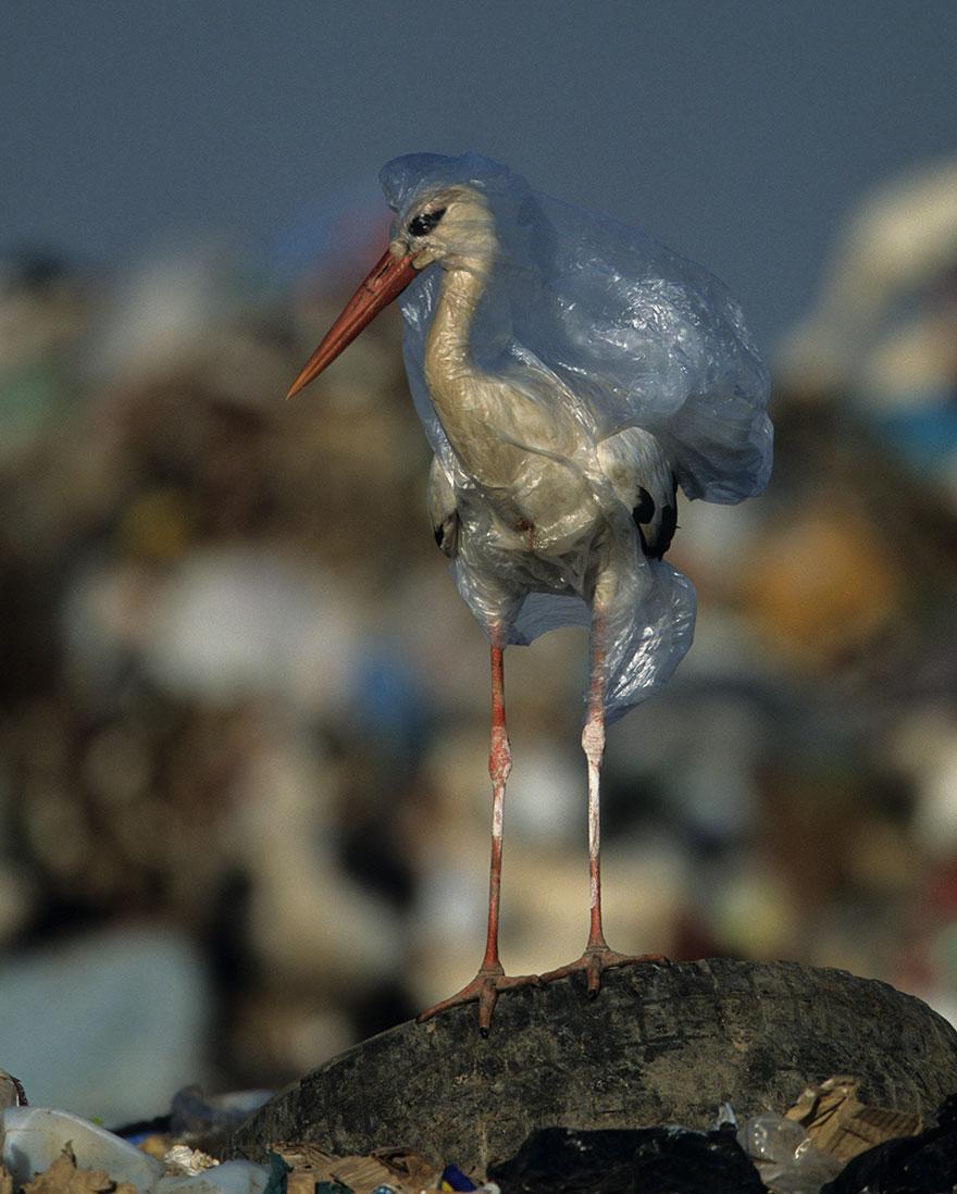 national geographic выпустил номер, посвященный проблеме пластика в океане National Geographic выпустил номер, посвященный проблеме пластика в океане plastic crisis impact on wildlife national geographic june issue cover 9 5afd83f808949  880