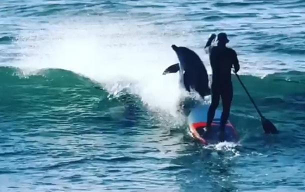 В Австралии дельфин напал на серфера