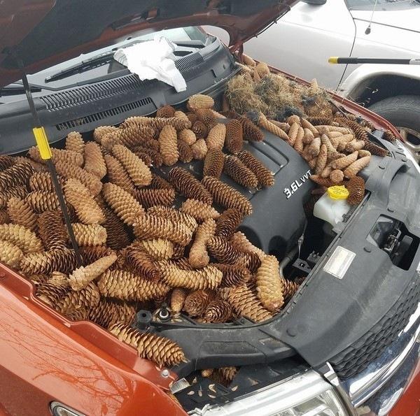 В Мичигане белки спрятали в авто 23 килограмма еды