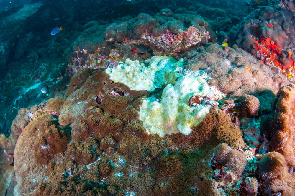 Большой Барьерный риф умирал и возрождался пять раз за 30 тысяч лет Большой Барьерный риф умирал и возрождался пять раз за 30 тысяч лет shutterstock 1084899620