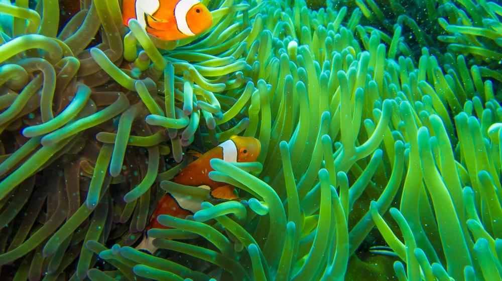 Большой Барьерный риф умирал и возрождался пять раз за 30 тысяч лет Большой Барьерный риф умирал и возрождался пять раз за 30 тысяч лет shutterstock 1089117659