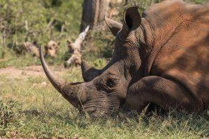 Климатологи знают, как спасти животных от вымирания