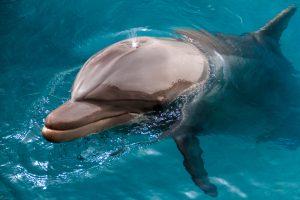 Биологи измерили уровень счастья дельфинов