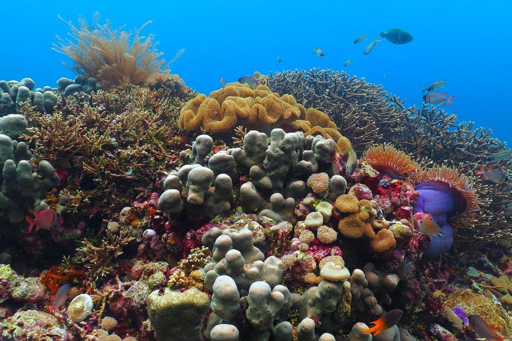 Большой Барьерный риф умирал и возрождался пять раз за 30 тысяч лет