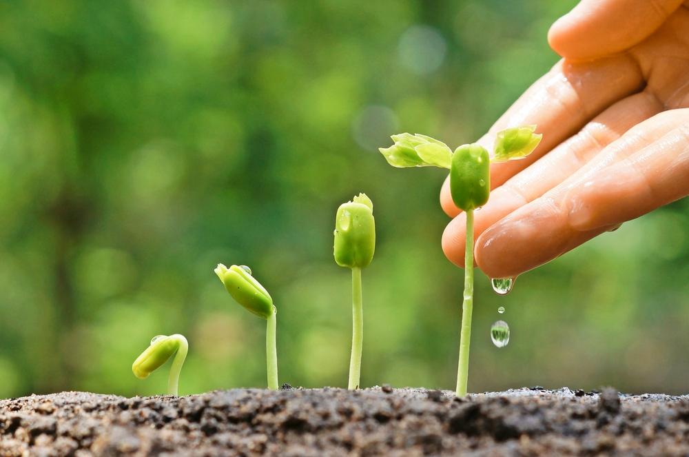 Растения разговаривают друг с другом по подземной сети