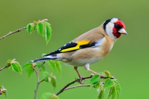 Браконьеры вывезли из Украины полмиллиона диких птиц