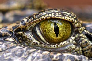 На Филиппинах отец достал сына из пасти крокодила