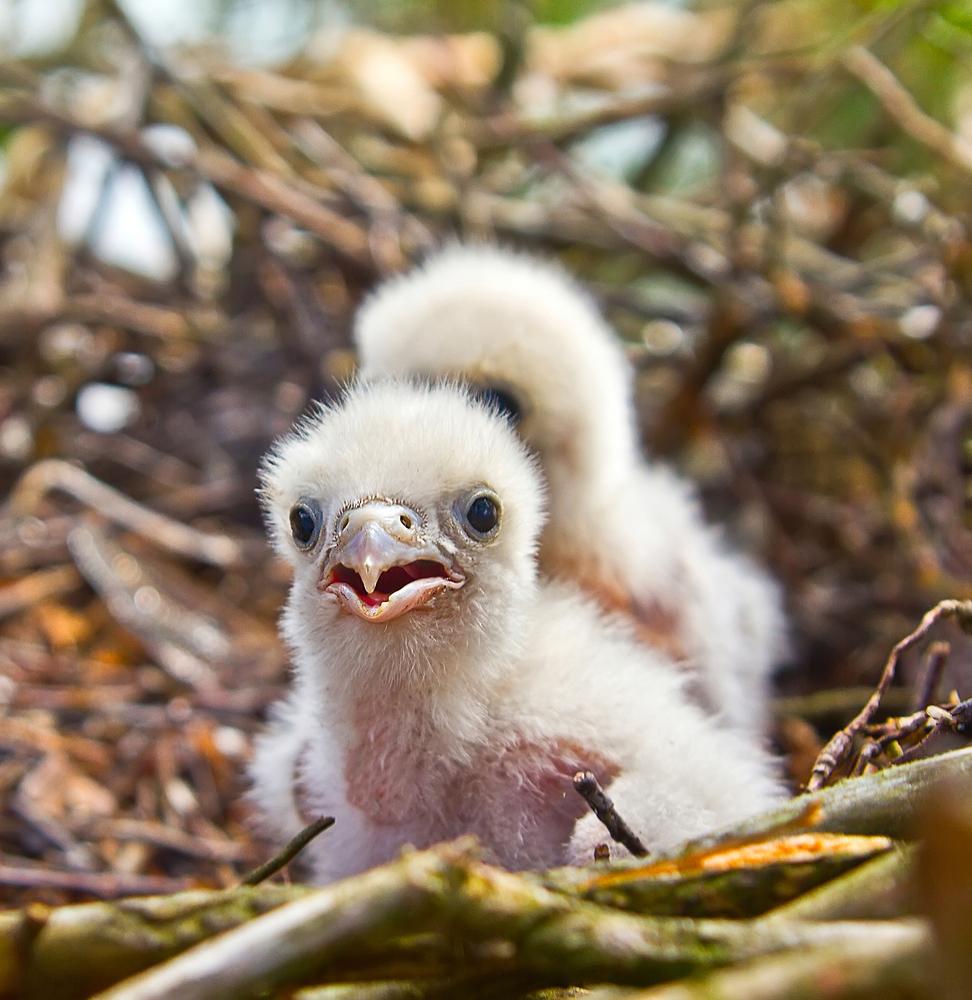 Канада отменила военные маневры, чтобы не пугать птиц Канада отменила военные маневры, чтобы не пугать птиц shutterstock 456103687