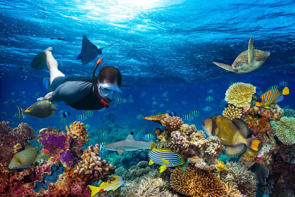 7 фильмов об удивительном подводном мире