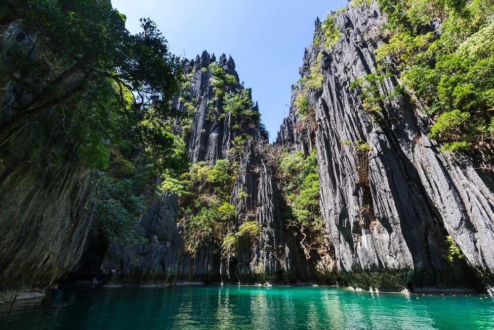 Загадка для ученых: на Филиппинах нашли уникальный вид землероек