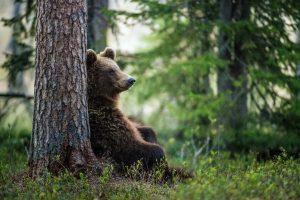 Заблудившихся в тайге российских подростков спас медведь. Или дерево
