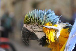 В Германии соседи вызвали полицию попугаю