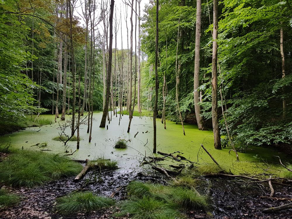 Археологи нашли поле жестокой битвы римлян и варваров в болотах Дании