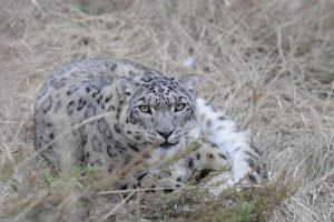Прощайте, соседи! 7 видов животных, которые могут вымереть еще при нашей жизни