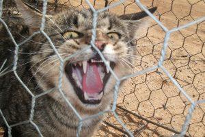 В Австралии построили 44-километровый забор от кошек