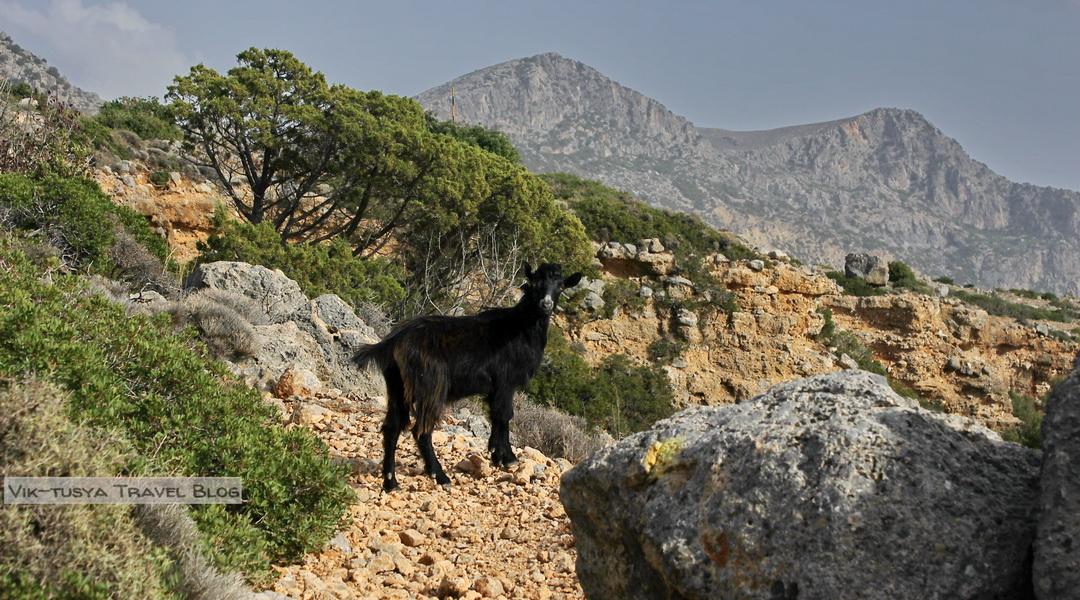 Скалы, бухты и тишина: трекинг на Крите Скалы, бухты и тишина: трекинг на Крите 23
