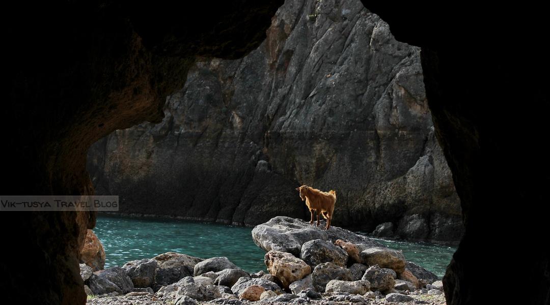 Скалы, бухты и тишина: трекинг на Крите Скалы, бухты и тишина: трекинг на Крите 32