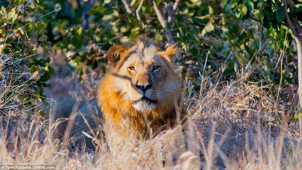Сафари в Ботсване: день и ночь саванны в гипнотическом таймлапс-видео
