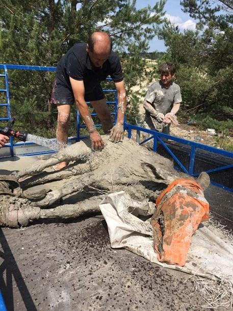 Под Житомиром спасли из глиняного «болота» лосей Под Житомиром спасли из глиняного «болота» лосей 5 2