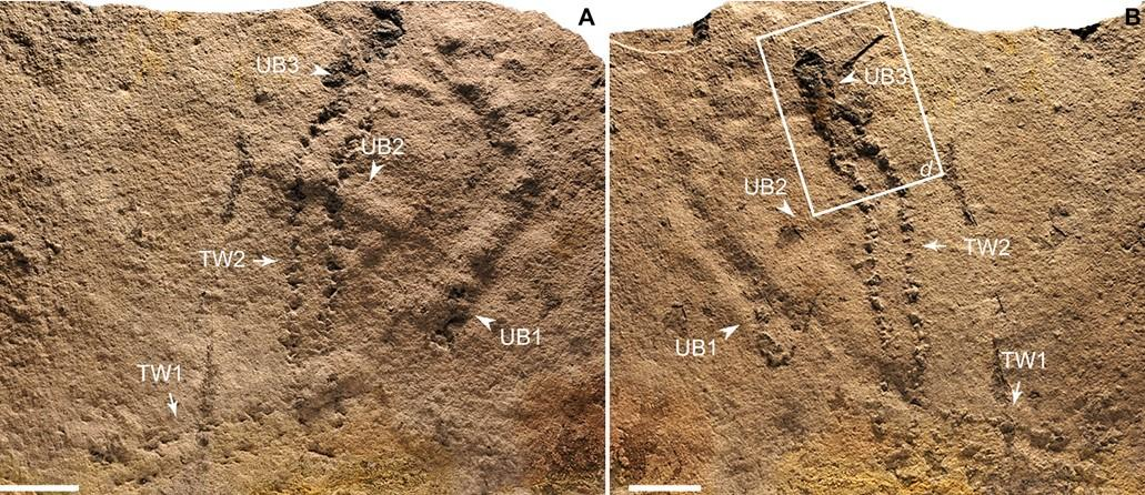 Древнейшие следы животного найдены в Китае