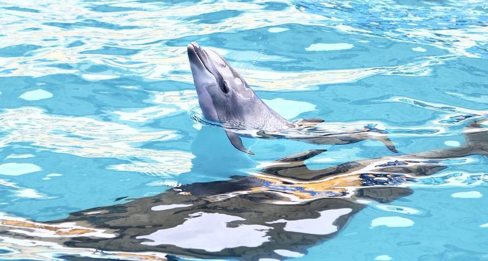 В Одессе дельфиненок родился прямо на глазах у посетителей дельфинария В Одессе дельфиненок родился прямо на глазах у посетителей дельфинария 7747775 trademasters 5b2790f23c983