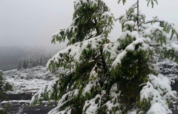 В Закарпатье из-за выпавшего снега эвакуировали детский лагерь В Закарпатье из-за выпавшего снега эвакуировали детский лагерь 927a7bc64e120c4ce5f6d8bccc2f1269 1 614x395