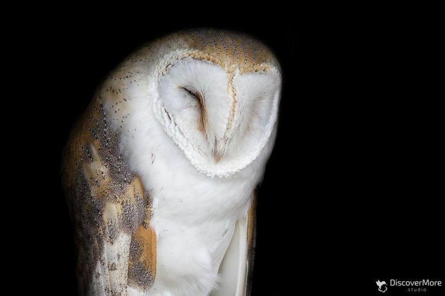 Хищная сила: польский фотограф делает портреты птиц PTAKI 1 5b0c32c9635ea  880