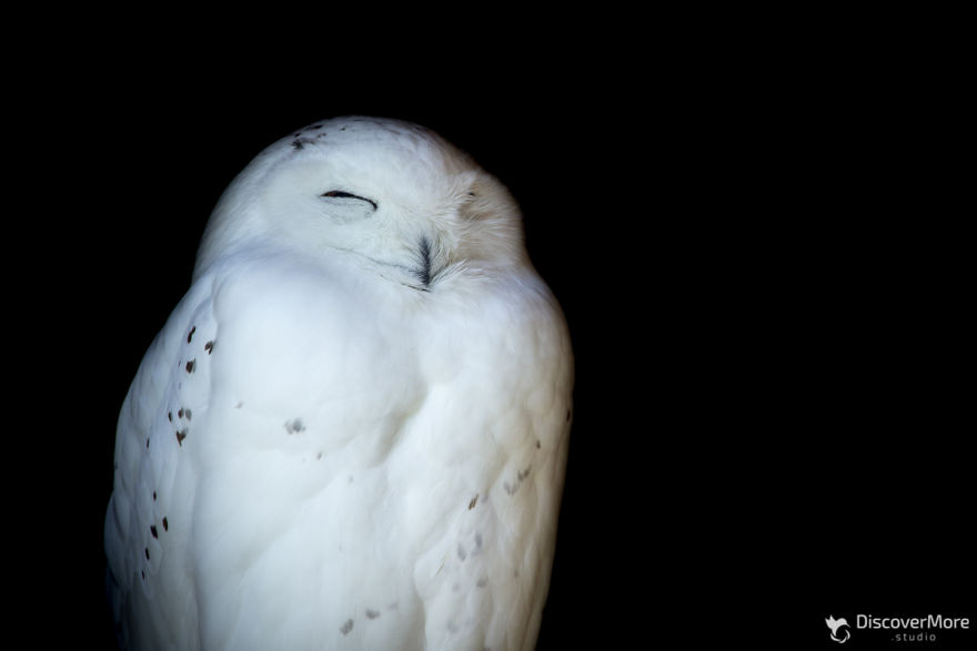Хищная сила: польский фотограф делает портреты птиц PTAKI 2 5b0c32d0e7fe2  880