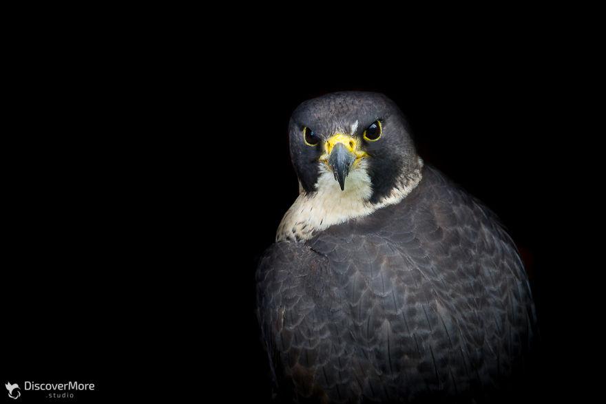 Хищная сила: польский фотограф делает портреты птиц PTAKI 3 5b0c330919069  880