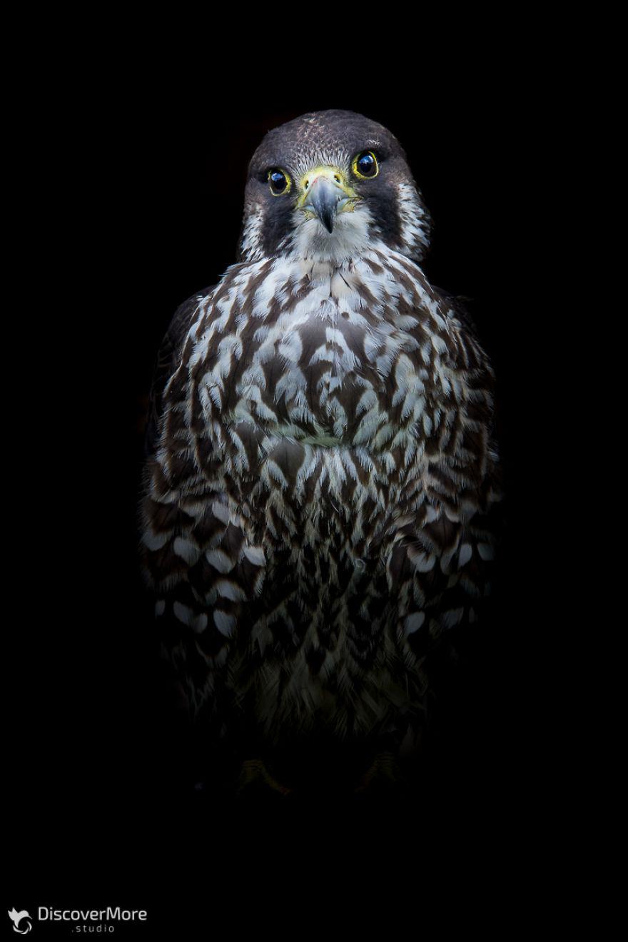 Хищная сила: польский фотограф делает портреты птиц PTAKI 4 5b0c32d874ec2  880