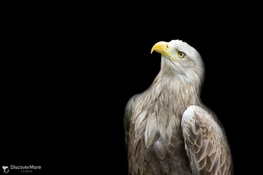 Хищная сила: польский фотограф делает портреты птиц PTAKI 6 5b0c32e078830  880