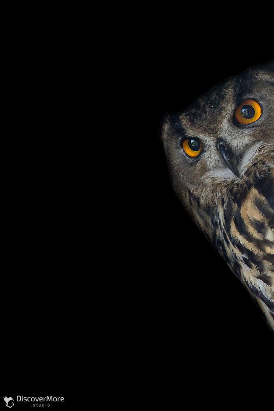 Хищная сила: польский фотограф делает портреты птиц PTAKI 7 5b0c32e4983b1  880