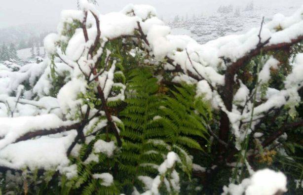 В Закарпатье из-за выпавшего снега эвакуировали детский лагерь В Закарпатье из-за выпавшего снега эвакуировали детский лагерь a3fa010b18b20182e433f3b94e6f5f5c 614x395