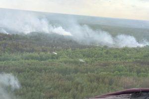 Пожар в Чернобыльской зоне: видео