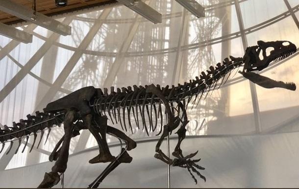 Во Франции продали в частные руки скелет неизвестного науке динозавра