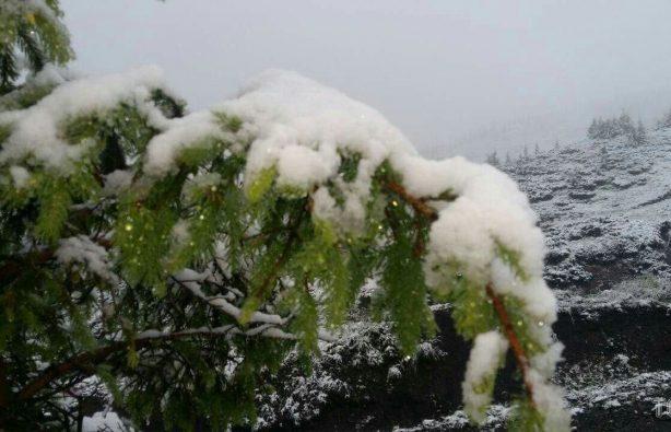 В Закарпатье из-за выпавшего снега эвакуировали детский лагерь В Закарпатье из-за выпавшего снега эвакуировали детский лагерь f2f9bede0e14a170af2ead04b7b29ede 614x395