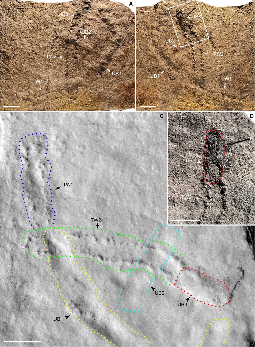 Древнейшие следы животного найдены в Китае Древнейшие следы животного найдены в Китае im im F2