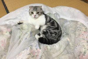 Кот на час: в Японии открылся необычный отель